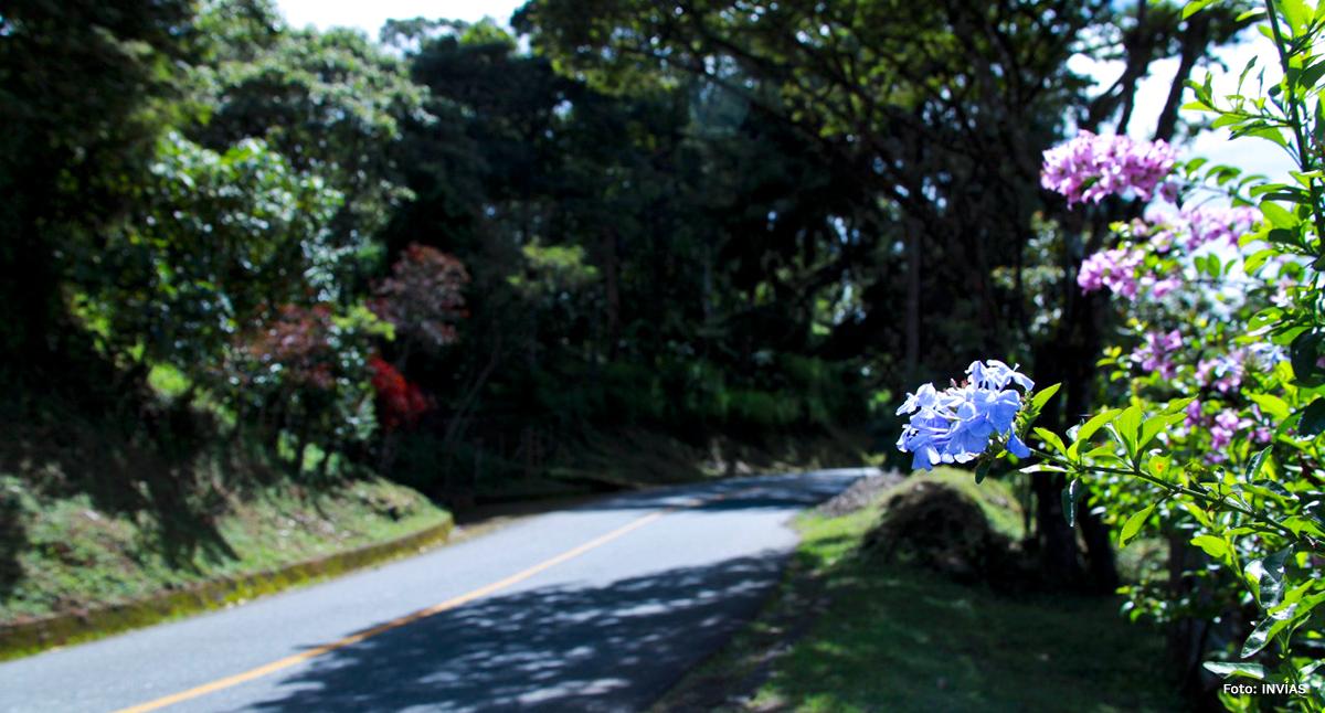 Fotografía de orquídea a lo largo de vía en Colombia.