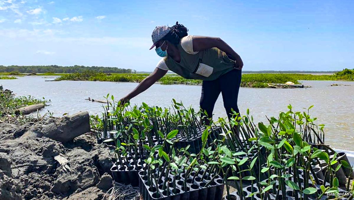 Fotografía habitante de la región haciendo sus labores de compensación con la implantación de mangle.